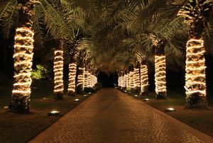 A row of palm trees wrapped in white lights.