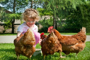 A little girl and her backyard chickens.