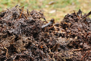 fresh animal manure