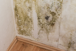 Extensive mildew growth spreads on the wall of a home.