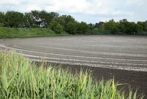 sewage drain field