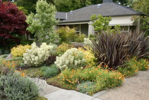 A xeriscaped front yard.