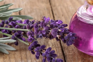 bottle of lavender oil and lavender herb