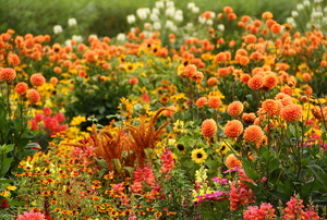 An orange and red-colored flower garden symbolizing fall weather.