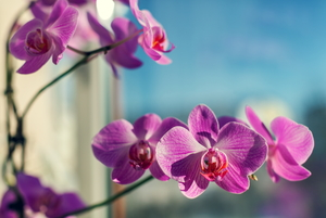 Preserve an Orchid Flower by Drying It