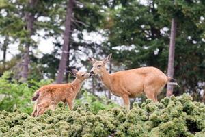 4 Ways to Deer-Proof Your Yard