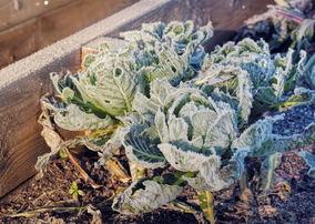 Xeriscape Gardening in the Winter