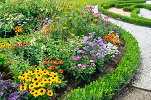 What to Plant in Front of Garden Borders