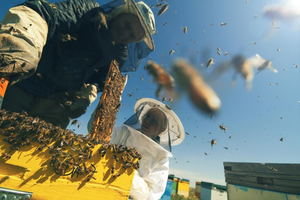 Safety Practices for Beekeeping