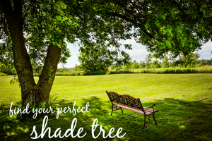 5 Easy Shade Trees to Grow