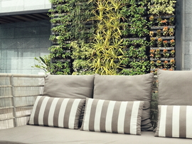 Living Wall: Create a Vertical Garden