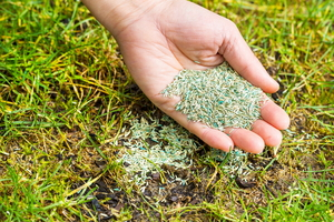 Terms of the Trade: What Is Overseeding?