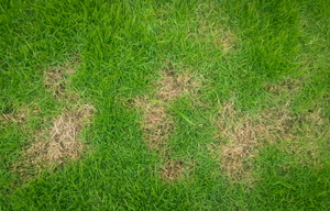 How to Eliminate Bald Patches in the Lawn
