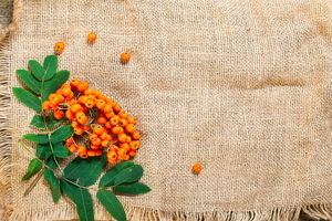 4 Ways to Use Burlap in Your Yard This Fall Season