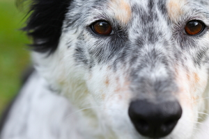 How to Make Custom and Emergency Dog Muzzles