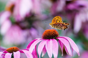 3 Plants That Attract Butterflies