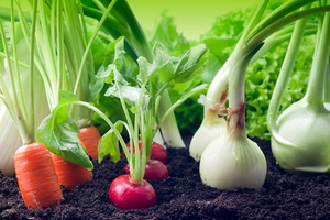 Is Your Garden as Organic as You Think It Is?