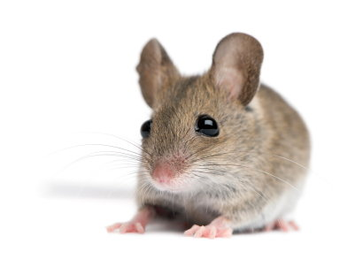 How to Get Rid of Rats in a Mobile Home   DoItYourself com