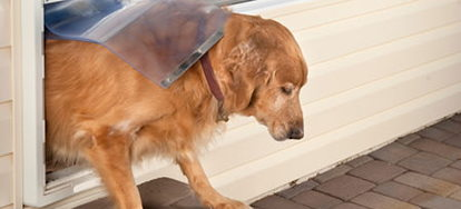 Pet Door Installation In 8 Steps Doityourself Com