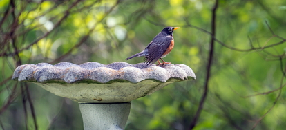 How to paint a concrete birdbath properly for Trisodium phosphate for cleaning concrete