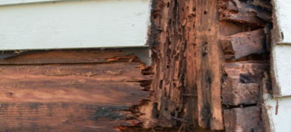 Home Renters Insurance >> Mistakes to Avoid When Treating Dry Rot | DoItYourself.com