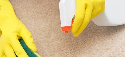 Carpet Mildew Odor Removal Doityourself Com