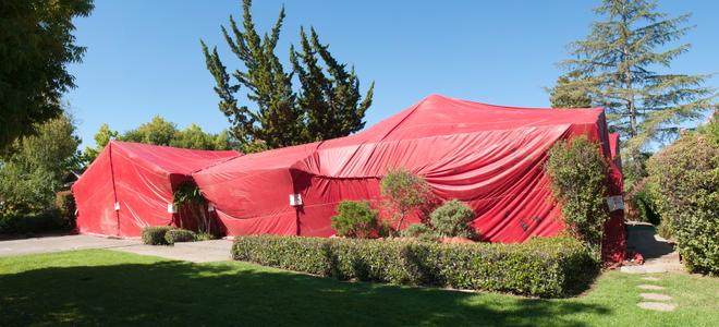 How To Prepare For Termite Tenting Doityourself Com