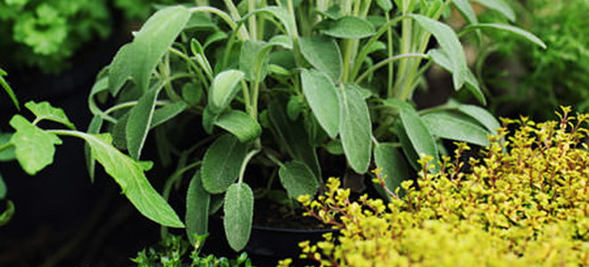 Cultivating An Herb Garden Is A Practical Way To Add Flavor Your Kitchen Delight And Even Old Fashioned Remes Medicine Chest