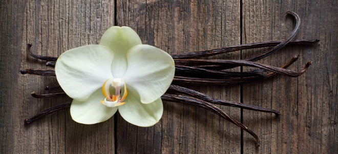 what plant produces vanilla