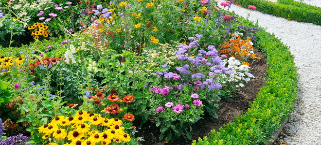 What To Plant In Front Of Garden Borders What To Plant In Front Of Garden  Borders