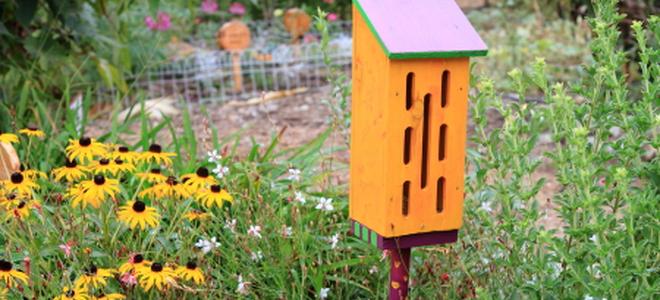 Diy Butterfly House In 5 Steps