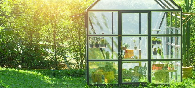 All glass green house in a green yard with sun