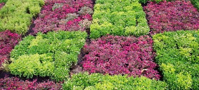 How to Use Cover Cropping to Make Your Garden Sustainable