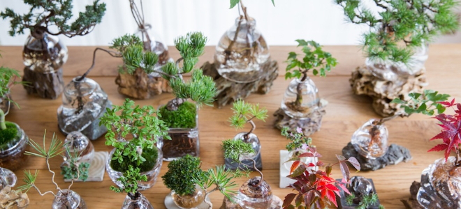 Water Bonsais in handcrafted pots