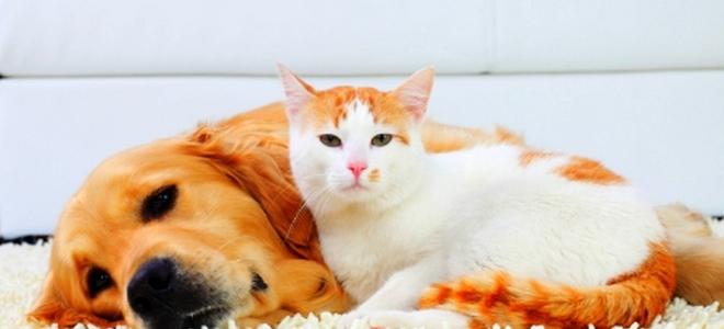 diy cat urine smell removal