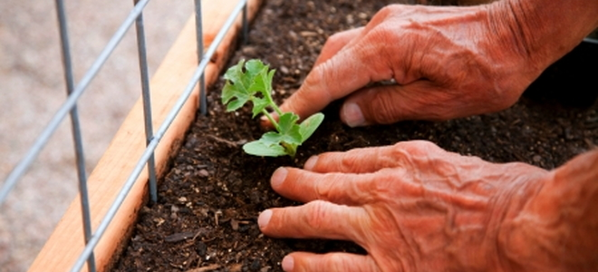 Creating The Right Soil Mix For Square Foot Gardening Creating The Right  Soil Mix For Square Foot Gardening