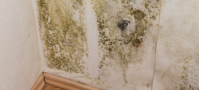 5 tips for using mildew resistant paint doityourself com rh doityourself com Mold Resistant Paint for Bathrooms Mold Resistant Paint Concrete