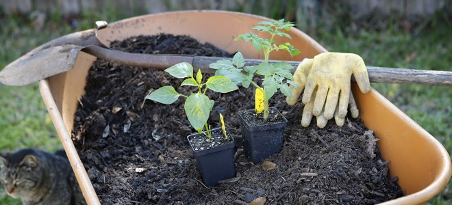Must have beginning gardening tools for Gardening tools must have