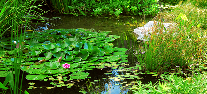 Common pond problems for Pond problems