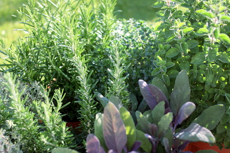 Planning A Small Vegetable Garden
