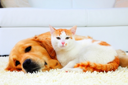 DIY Cleaning Methods: Removing Pet Urine & Cleaning Carpets | DoItYourself.com