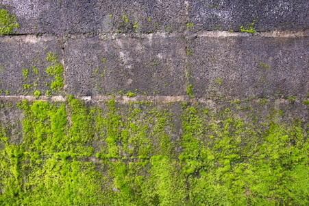 How To Remove Moss From Concrete Doityourself Com