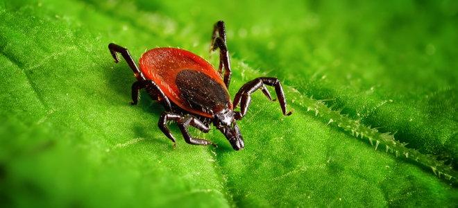 Natural Ways to Rid Your Yard of Ticks | DoItYourself.com