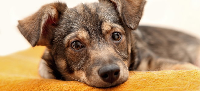 5 Best Pet Odor Removal Options For