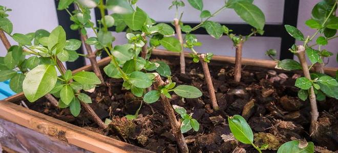 Αποτέλεσμα εικόνας για How to Double the Plants in Your Yard for Free