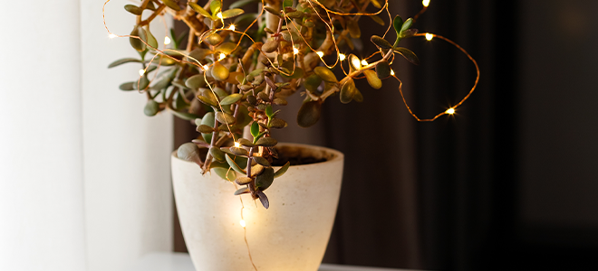 String lights on a houseplant