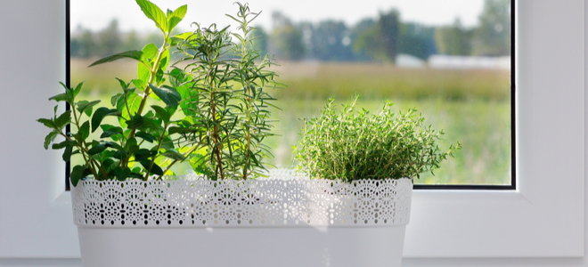 herbs planted indoors in containers by a window