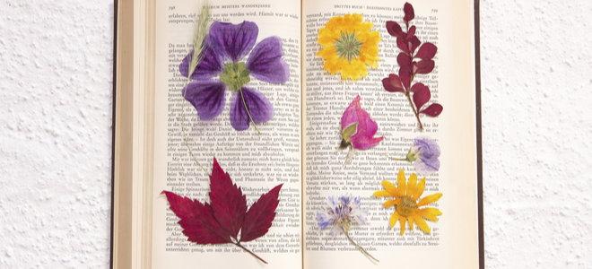 beautiful pressed flower crafts in a book