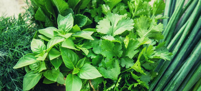 home-grown collection of fresh herbs