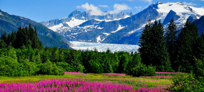 beautiful field forest and mountains in Alaska